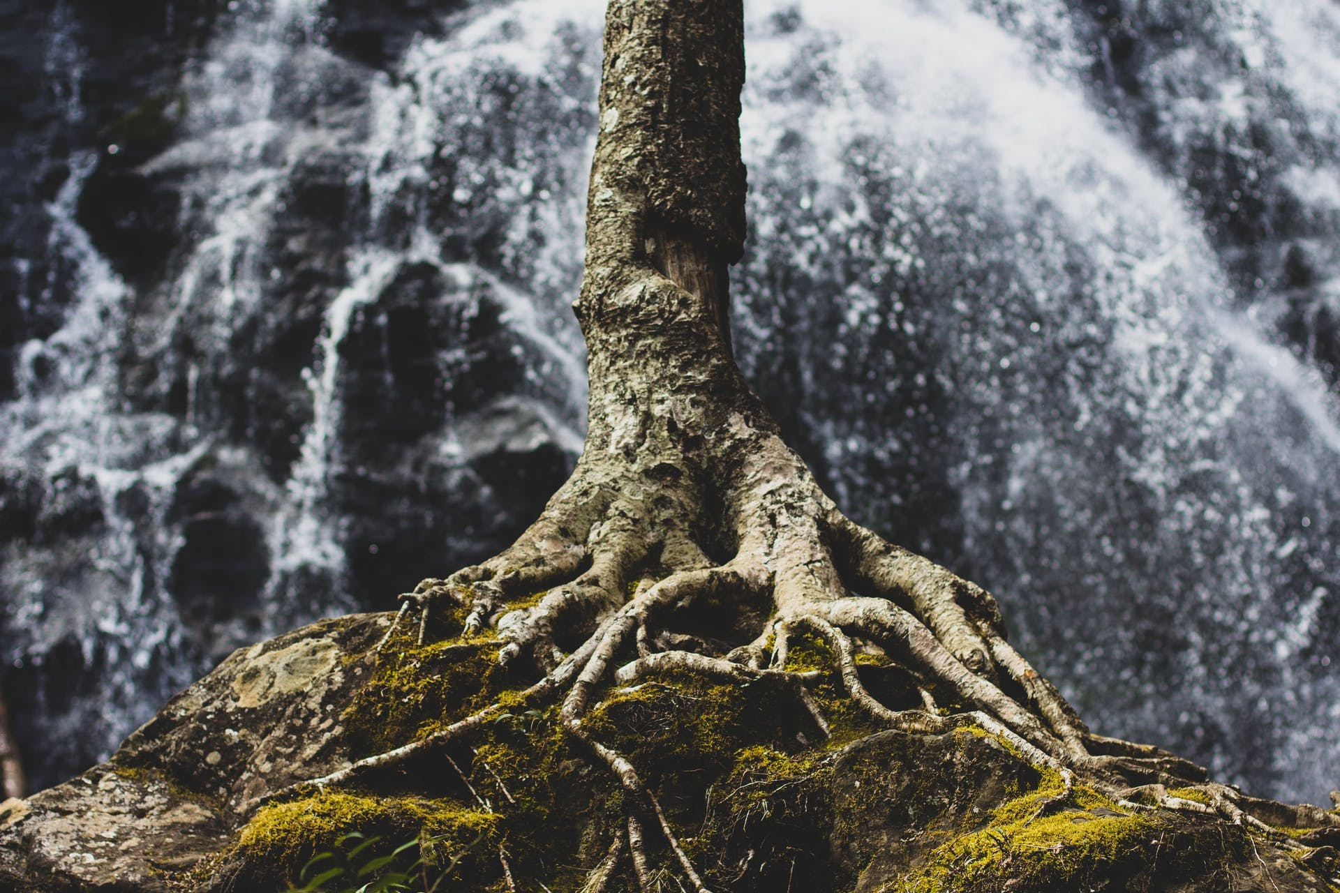 tree roots in front of a waterfall